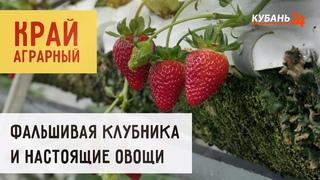 Фальшивая клубника и настоящие овощи | Край аграрный