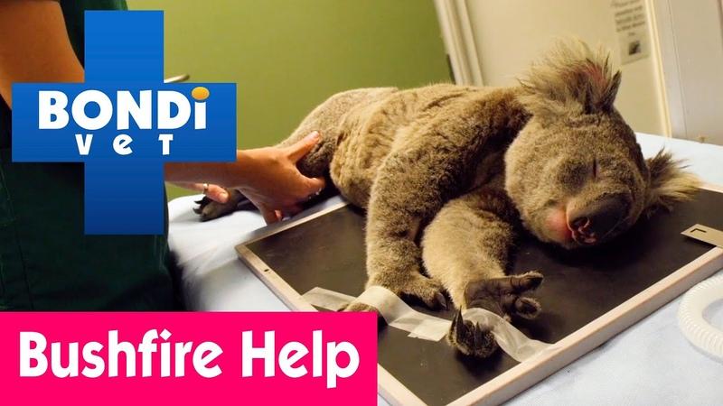 🐨 Dr Alex's Bushfire Emergency in Australia