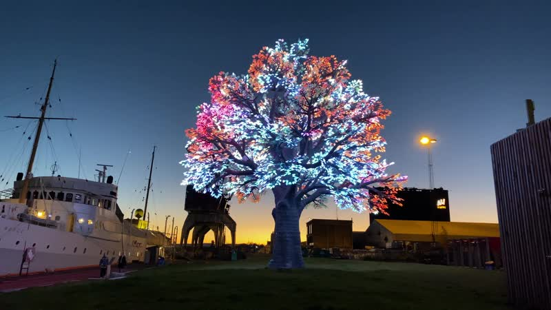 Oslo treet Tree of Tenere Burning man tree in 4K The worlds most expensive tree 1080p