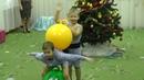 Утренник в саду. Новогодняя елка на тему Цирк. Силачи отжигают!