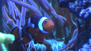 Домашний морской аквариум - невероятное зрелище!