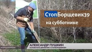 Субботники по борьбе с борщевиком Стоп Борщевик проходят в Калининградской области.