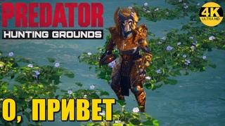 Predator Hunting GroundsПРИВЕТ ВСЕМ! ПОДДЕРЖИМ ОНЛАЙН ХИЩНИКОВ! ПООХОТИМСЯ, БРОПатч 4K