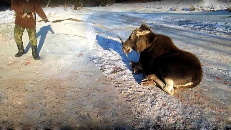 Спасение диких животных оказавшихся в беде