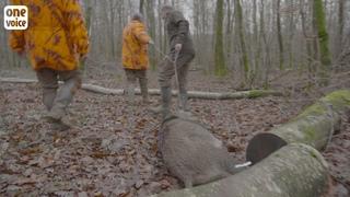 Réponse de One Voice au clip de la Fédération nationale des chasseurs