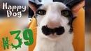 СМЕШНЫЕ ЖИВОТНЫЕ 2020 😺🐶 Лучшие приколы 2020 Кошки Собаки Смешные коты Забавные животные