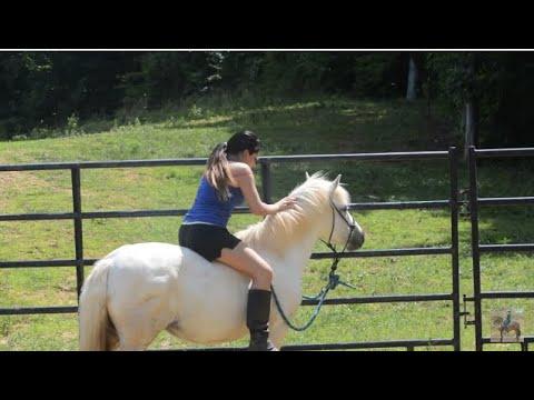 Riding pony bareback ponyboy