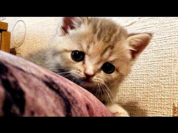 Милый Котенок играет и радуется Cute kitten plays and rejoices