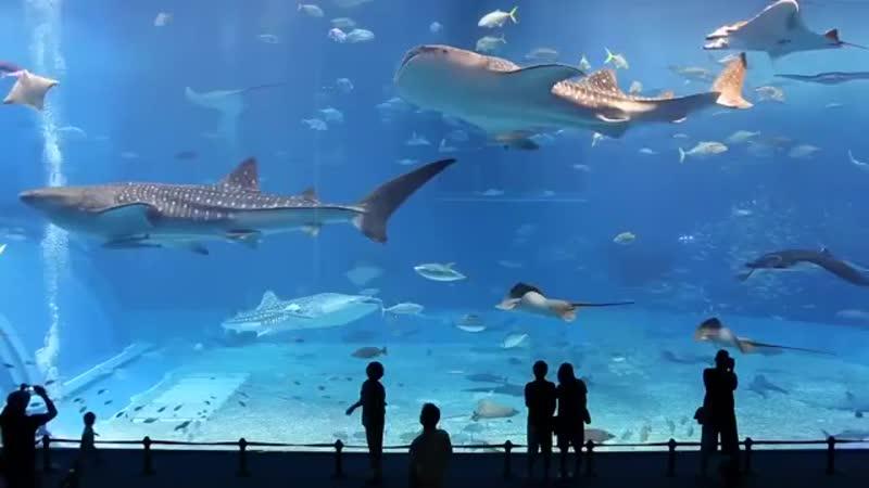 Okinawa Churaumi Aquarium in Japan