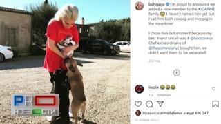 У Леги Гаги расстреляли и похитили собак