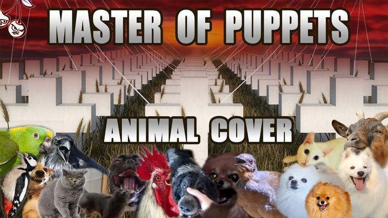 Animallica Master Of Puppies