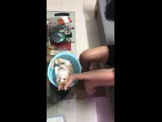 Отец Учит Дочку Мыть Младенца На Примере Кота