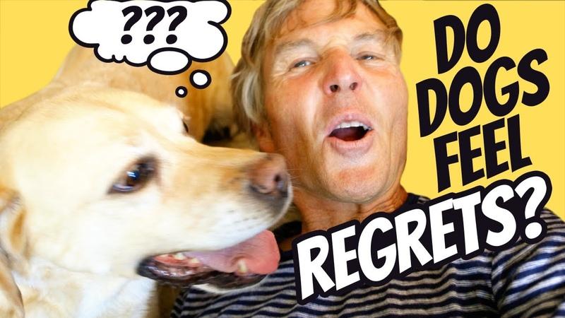 Чувствуют ли собаки сожаление Do Dogs Feel Regret