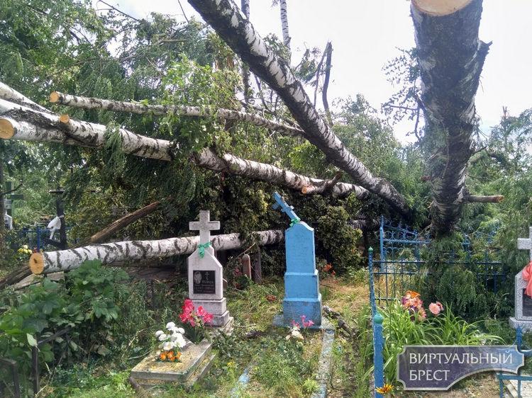 Бурелом на кладбище возле д. Великорита, Малоритский район