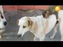 Cobalah tidak tertawa atau menyeringai - Monyet lucu VS Anjing dan kompilasi Kucing