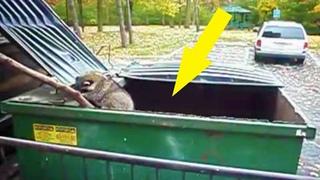 Неожиданная находка в мусорке, которая гарантированно вызовет у Вас КУЧУ ЭМОЦИЙ!