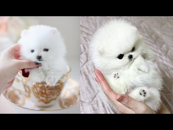 Super cute kittens Episode 9 Funny Kittens And Puppies Awesome Compilation Cute Kittens