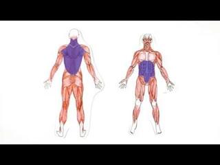 Познавательная анатомия. Мышцы. / Cognitive anatomy. The muscles.