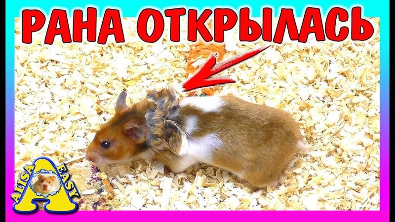 ХОМЯЧИХА ГОТОВИТ ПОБЕГ ОТОРВАЛА КРЫЛЬЯ хочет к ветеринару Хомяк ПОЛОМАЛА клетку Alisa Easy Pets