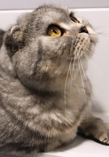 Ромка котик наш