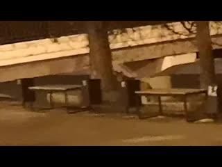 Лиса гуляет на Пермь 1