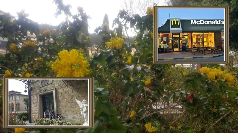 Италия Коро2нА Красная зона Итальянские кафе и рестораны закрыты а МакДональдс работает Почему