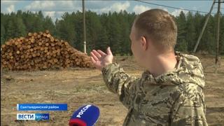 Близ станции Язель спилили 17 гектаров леса. Местные жители интересуются, куда пропал лес