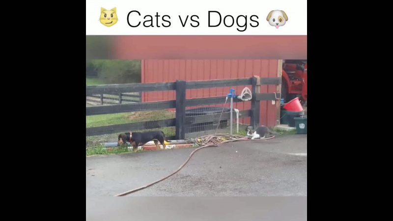 Прикольный ролик про собак и кошек )))