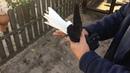 николаевские голуби черные белохвостые Владимира Викторовича Маркова 1ч 0990050855т.