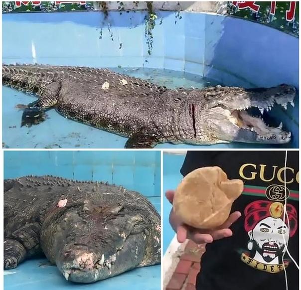 В Китае посетители зоопарка закидали крокодила камнями, чтобы убедиться, что он жив