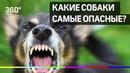 Какие собаки самые опасные Список пород утвердило правительство