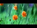 Camaleonti Applausi original version