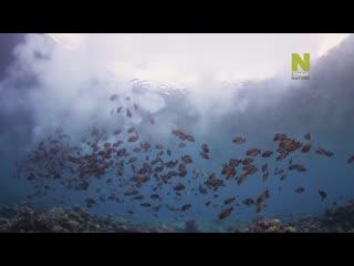 ⚜️Большой Барьерный риф  Живое сокровище - Чудо жизни   1 серия из 2   2020   HD 1080