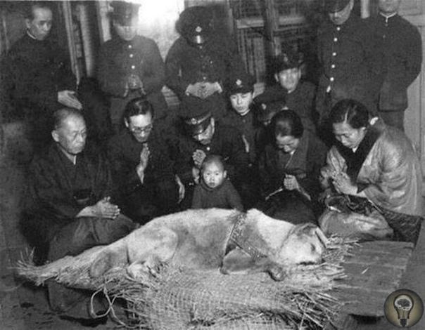 Самый верный друг. Похороны Хатико, 1935 год. Собака породы акита-ину приходила на станцию встречать своего умершего хозяина в течение девяти лет вплоть до самой своей