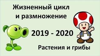 14. Размножение и развитие растения/грибы (9 или 10-11 класс) биология, подготовка к ЕГЭ и ОГЭ 2020