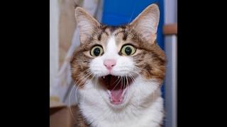 Котики, мурзики #смешные животные