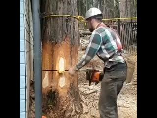 Ювелирно спилил дерево