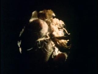 5 of 12 BBC Живая планета Море трав The Living Planet 1984