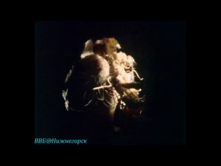 BBC Живая планета Портрет Земли 05 Моря трав Документальный 1984