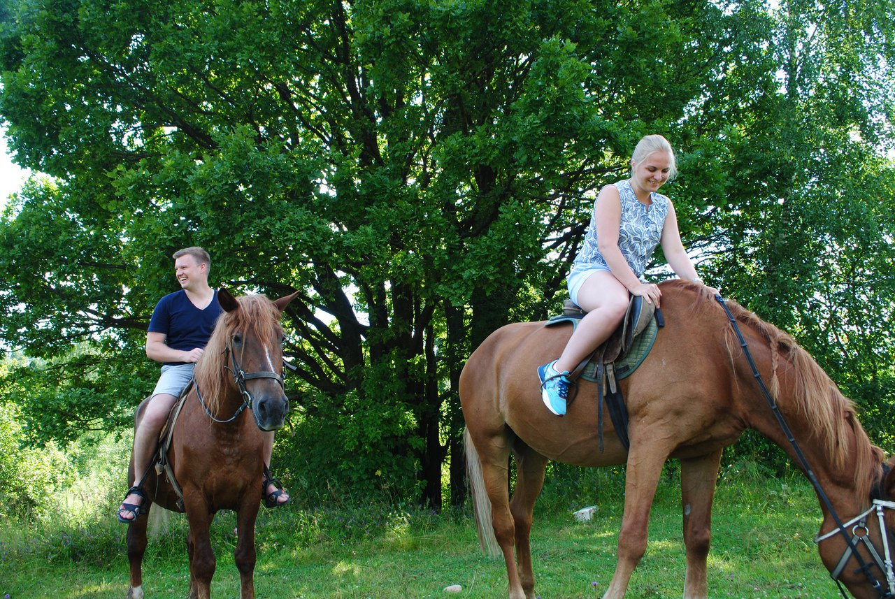 Любую нашу лошадку можно взять в аренду