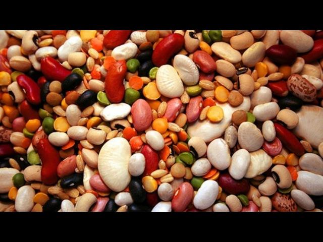 Чем полезны бобовые? Школа здоровья 09/08/2014 GuberniaTV