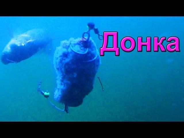Ловил на донку Подводная съемка рыбалка Ловля карася Fishing донка пружина с двумя крючками
