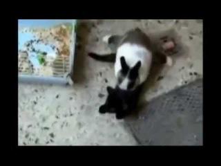 Смешные кошки, падения. Подборка #1