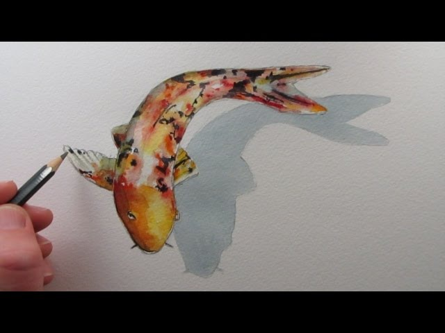 How to Draw a Fish Koi Carp narrated step by step
