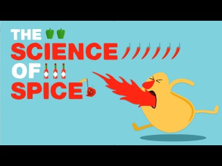 The science of spiciness - Rose Eveleth TED talks