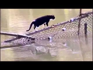 Кот переходит реку