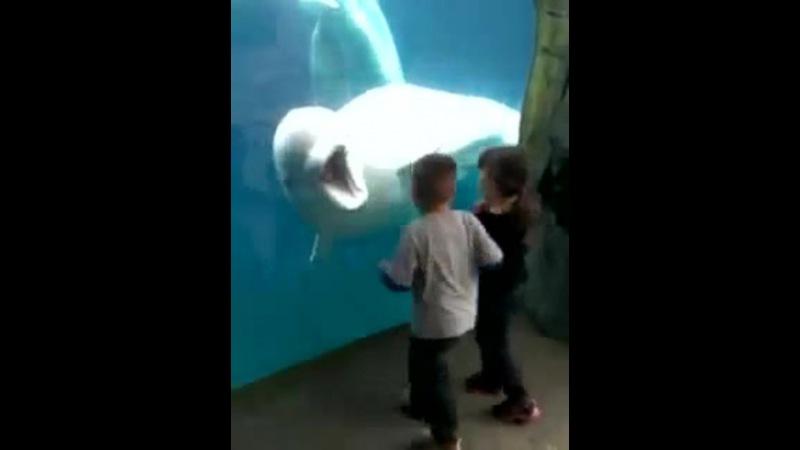 Beluga and kids