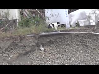 Кошка не смогла пройти мимо и помогла щенку выбраться из ямы