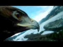 Fascinating pictures An eagle flies down the Kulm Ski Flying Hill