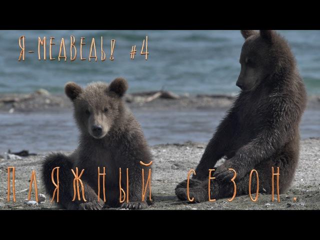 Пляжный сезон. Медвежата играютБурый медведь4Детям о животныхПрирода для самых маленьких.